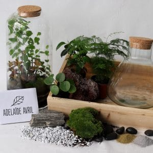 Atelier Terrarium Humide avec Adelaide Avril