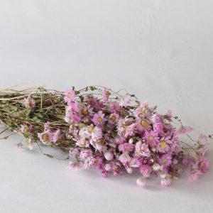 Bouquet de Rodanthe