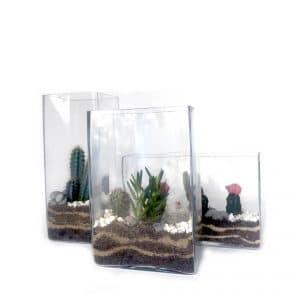 Terrarium Mix Cubes