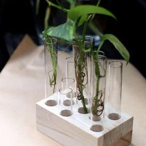 Boutures dans Fioles en verre sur support en bois rectangle