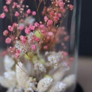Cloche Fleurs Gyphophile Rose H13