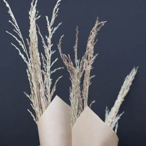 Calamagrostis Graminée Fleurs séchées