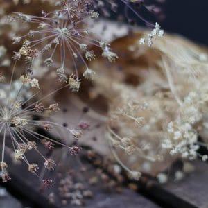 Daucus Carota Graminée Fleurs séchées