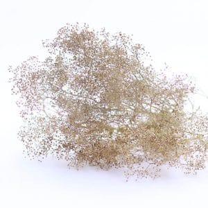 Gypsohpila naturel fleurs séchées