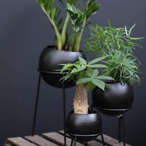 Asparagus H30 et Cachet pot rond