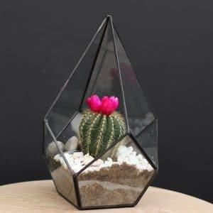 Terrariums Cactus pyramide