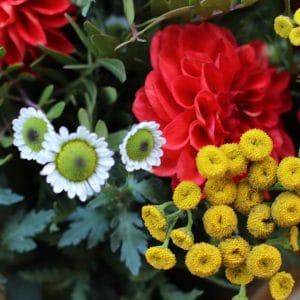 Bouquet Dahlia Corail et Petites Fleurs jaunes