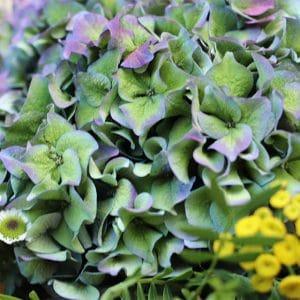 Bouquet Hortensia et Petites Fleurs jaunes